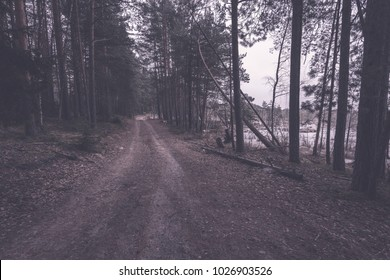 romantic gravel road in green tree forest with sunlight and shadows - vintage retro effect
