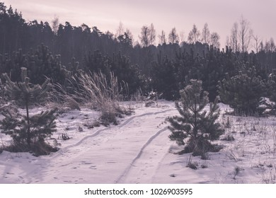 romantic gravel road in winter tree forest with sunlight and shadows - vintage retro effect
