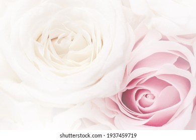 Romantic greeting card with tender flowers, closer look on buds roses