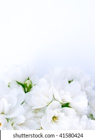 Romantic Jasmine Background With Space For Your Text or Images