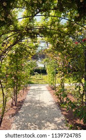 Romantic  love path, arches with rambling roses in full bloom