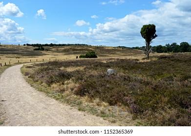 Romantic Luneburg Heath in Summer