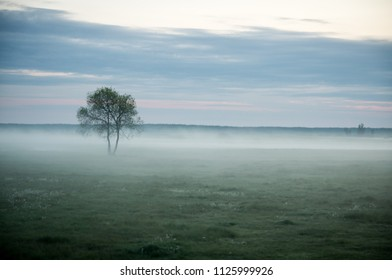 Romantic misty landscape with a tree