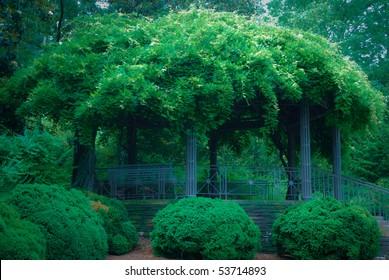 Romantic mysterious pergola overgrown with wisteria in Duke Gardens, Durham, nc