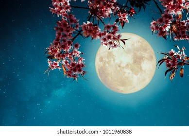Romantic night scene - Beautiful cherry blossom (sakura flowers) in night skies with full moon.  - Retro style artwork with vintage color tone.