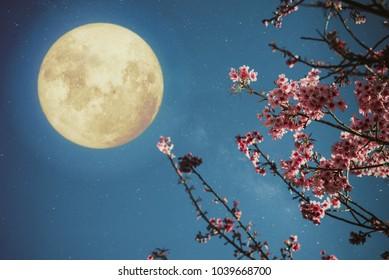 Romantic night scene - Beautiful cherry blossom (sakura flowers) in night skies with full moon.  - Retro style artwork with vintage color tone.