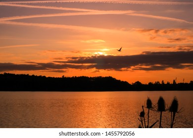 Romantic orange sunset over a shiny lake with rays of light. Silhouette of thistles in foreground and flight of a bird over the horizon