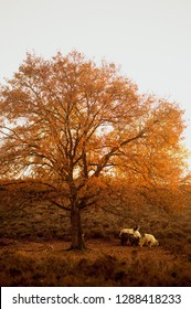 Romantic picturesque image of three feral  fairlylike goats  (Capra aegagrus hircus) under a tree at the heather