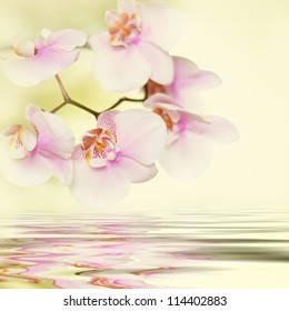 romantic pink orchid flower background reflected in water