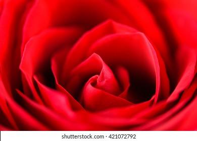 Romantic Red Rose Inside Velvet Petals