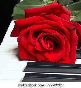 Romantic red rose on the keys of the piano on a black background