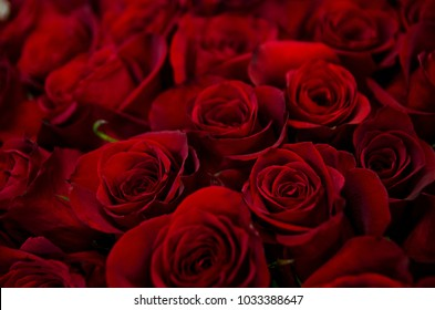 Romantic red roses.