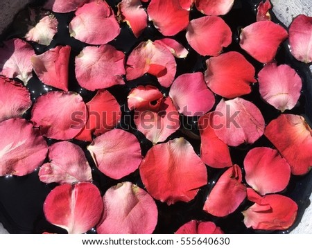 Romantic Red Roses On Water Wallpaper Stock Photo Edit Now