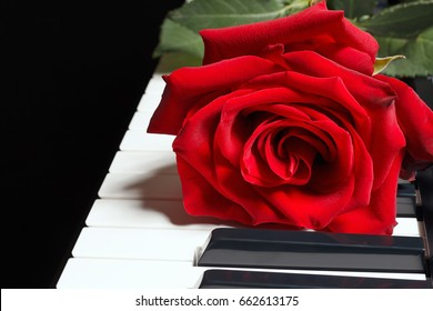 Romantic rose on keyboard of the piano on a black background