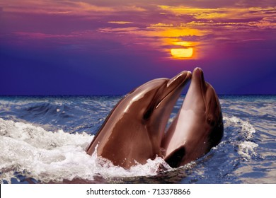Romantic scene. Couple dolphins swimming in water in the night. Sunrise over sea