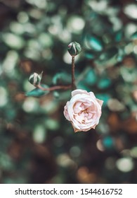 Romantic scene with white flowers on bokeh background