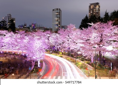 Romantic scenery of illuminated cherry blossom trees ( Sakura namiki ) in Tokyo Midtown, Roppongi at night, with busy traffic trails on street & high rise buildings in evening twilight in Tokyo Japan
