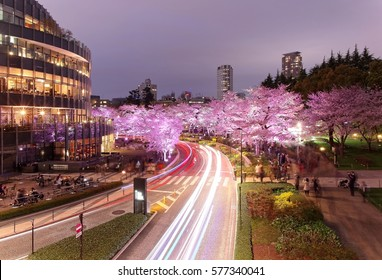 Romantic scenery of illuminated cherry blossom trees ( Sakura namiki ) in Tokyo Midtown at night, with busy traffic trails on street & high rise buildings in evening twilight in Roppongi, Tokyo Japan