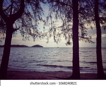 Romantic silhouette sea pine trees and sunset sea view in the evening background, Phuket town park, Thailand.