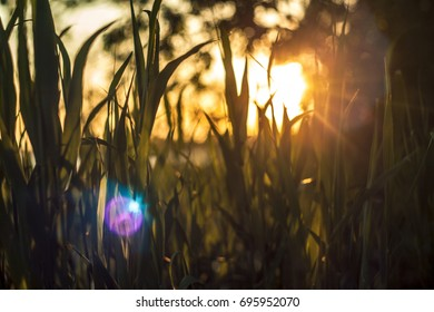 Romantic soft and blurry summer nature background with sunset, vintage lens bokeh effect and lensflaire