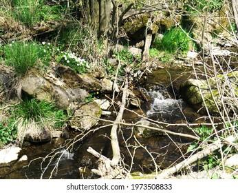 Romantic stream in the field marsh