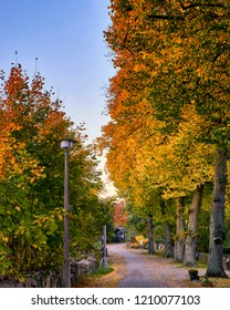 romantic tree alley in the city. natural autumn background