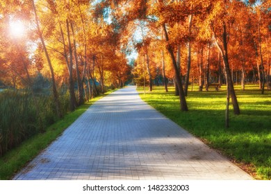 romantic tree alley in city park. natural autumn background
