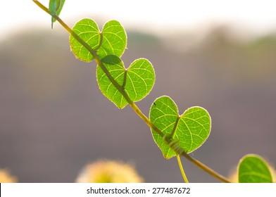 Romantic tree shape with heart shaped leaves, green leaf heart shape.