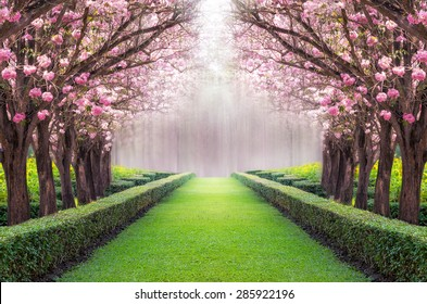 The romantic tunnel of pink flower tree, Pink trumpet tree.