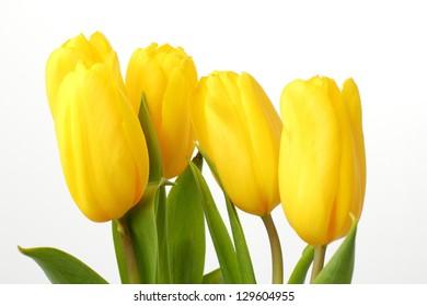 Romantic yellow tulips on easter