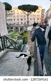ROME, ITALY - DECEMBER 27 2018: People meet the famous cats of Rome at Area Sacra in Largo di Torre Argentina