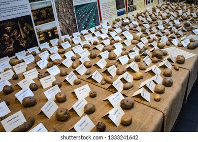 ROME, ITALY - FEBRUARY 17, 2019: Potato varieties from different countries of the world in an exhibition at Eataly in Rome for the Potato Feast.