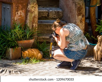 ROME, ITALY - JULY 26, 2018: Girl taking picture of a cat in the Borghetto degli Acetari (English: Acetari Courtyard).