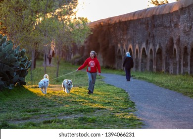 Rome, Italy - March 29, 2019: A woman is walking her two dogs in the green of the public park, near an ancient Roman aqueduct.