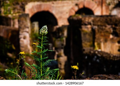 Rome, Italy - May 3 2013: Flower with the background of arch in coloseum in rome