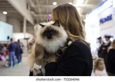 ROME, ITALY - NOVEMBER 11, 2017: The Super Cat Show, one of the most important feline events from Italy and in the world. In competition, the most beautiful and elegant specimens.