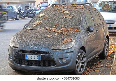 ROME, ITALY - OCTOBER 29, 2015: parking in big cities in a tree-lined avenue full of birds causes an inevitable fouling of the car full of bird droppings