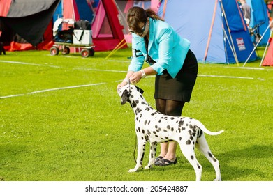RONNEBY, SWEDEN - JULY 05, 2014: Blekinge Kennelklubb international dog show. Black and white spotted dalmatian with handler in ring.