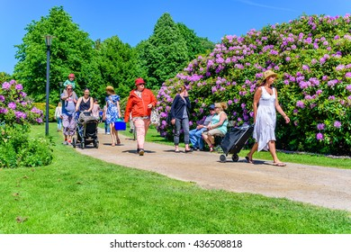 Ronneby, Sweden - June 6, 2016: The Swedish national day celebration in public park. People walking on a gravel path between Rhododendron in bloom. Trees in background.