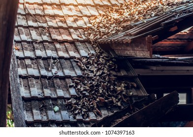 Roof Dry leaf sunlight background