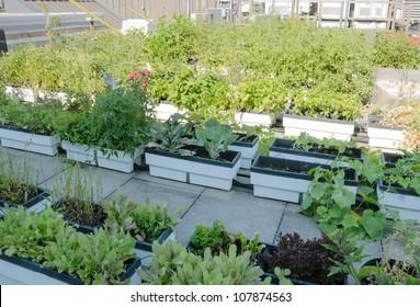 Roof Garden on Urban Building