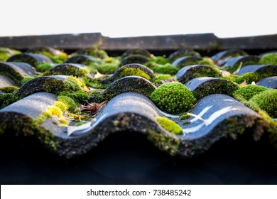 Roof with green moss