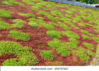 Roof greening with succulents and other plants of a sports hall in Hanover, Lower Saxony, Germany