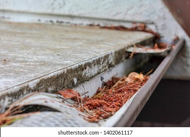 Roof gutter clogged with leaves, pine needles and other debris. Damaged plastic mesh gutter guard and leaf screen. Rain gutter inspection, cleaning and maintenance is required prevent clogged gutters