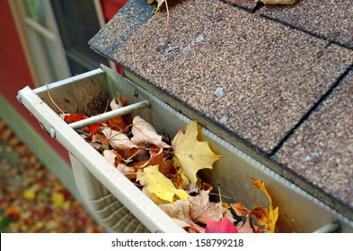 Roof Gutter and downspout filled with autumn leaves