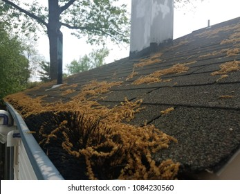 roof of house covered in pollen