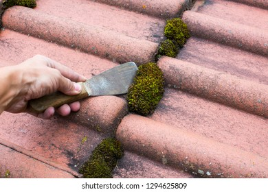Roof maintenance remove moss with spatula