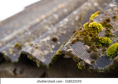 the roof in the moss