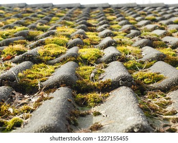 Roof tiles with moss at close up, low angle