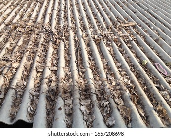 Roof top with waste leaves in summer texture background